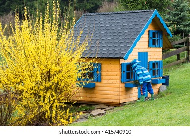 little boy in raincoat looking into a wooden playhouse with blue windows in backyard garden with yellow blooming forsythia after the rain