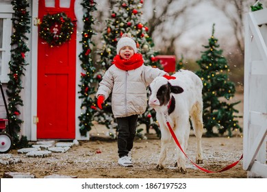 A little boy in a red scarf hugs a small black and white bull on the background of Christmas trees. White fence. High quality photo