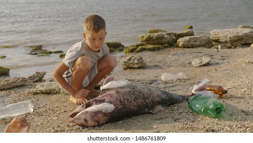 A little boy removes plastic bags from a dead dolphin lying on the beach. Environmental disaster concept.