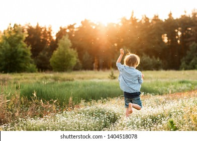 little boy runs along the daisy to the forest at sunset