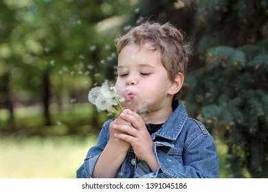 Little boy scatters dandelion seeds