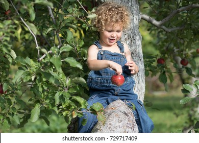 A little boy is sitting in an apple tree with a red apple. He is wearing blue jean overalls and has blonde curly hair. It is a sunny day at the orchard.