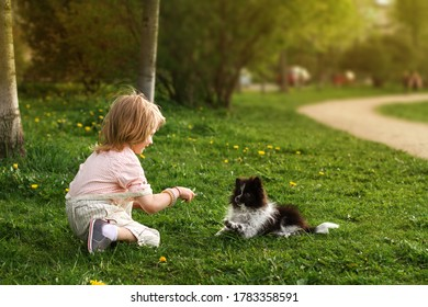 Little boy sitting on the grass in the summer park, playing with a small Pomeranian spitz puppy.