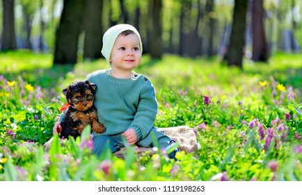 Little boy sitting on the stump with a friend little Yorkshire Terrier puppy at the forest