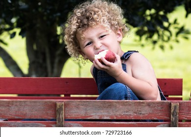 A little boy is sitting in a wooden red wagon and eating a red apple. He has blonde curly hair and is wearing blue jean overalls. He is at the apple orchard.