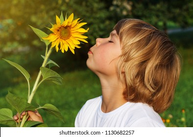 Little boy smelling flower of sunflower in the open air.