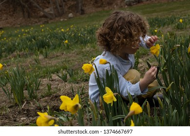 A little boy is smelling the flowers in a meadow full of yellow daffodils in the springtime. He is picking flowers in the garden outside. The blooding flowers are planted in the ground. Playing child