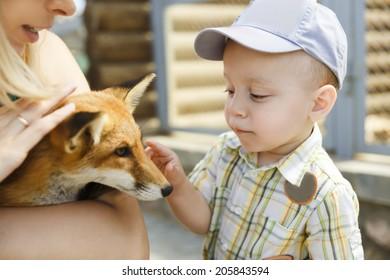 Little boy touching the fox in a zoo