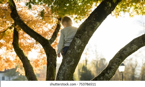 Little boy in a tree branch standing with his back to the camera  looking down.