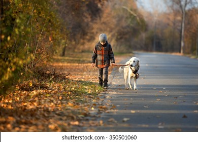 Little boy walking with a golden retriever  in autumn park