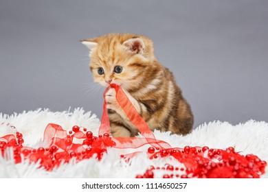Little British kitten and Christmas decoration on white fur