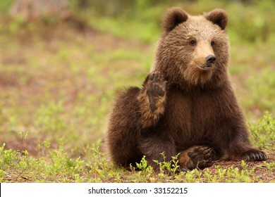Little brown bear waving at you