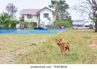 Little brown dog in the countryside