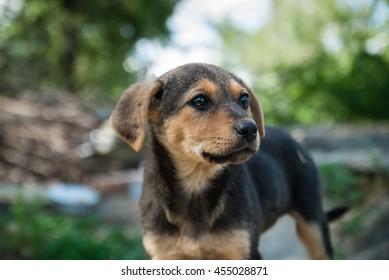 little brown dog. puppy