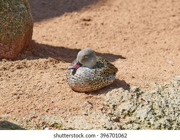 Little brown duck is sitting on a sun.