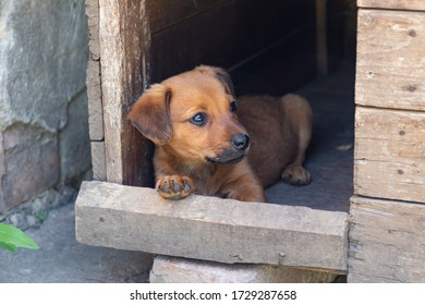 little-brownred-puppy-wooden-booth-260nw