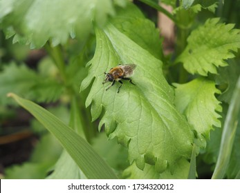 Little Bumble Bee sitting on leaf and waiting in spring at a sunny day