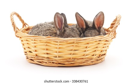 Little bunnies in a basket on a white background.