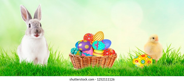 Little Bunny In Basket With Decorated Eggs and spring chicken - Easter Card. Space for text