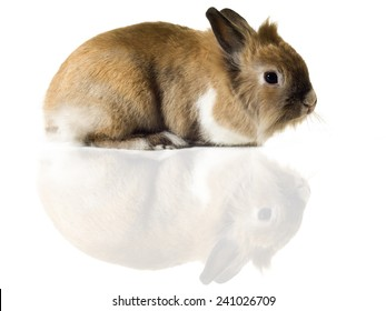 Little bunny, white background, horizontal composition.