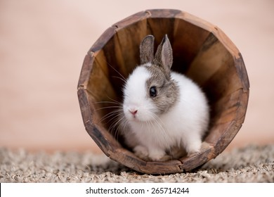 A little bunny in a wooden pot looking to the left