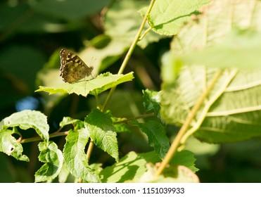 Little butterfly on a leaf.