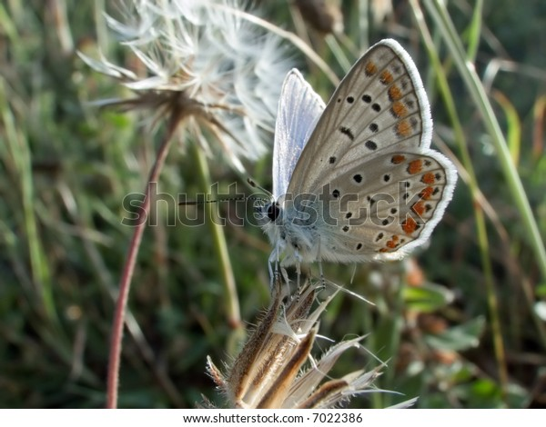 little butterfly sitting on the thorn and look at us playfull