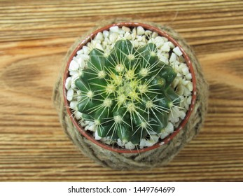 Little cactus in decorative flower pot on a wooden table. Floriculture.