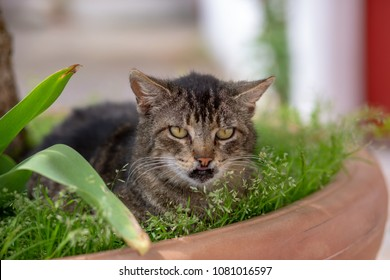 Little cat with cleft palate, lying in the green