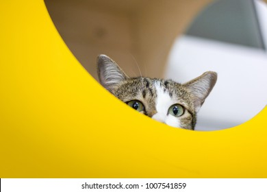 Little cat hidding and looking something behind yellow board