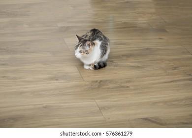Little cat on the floor