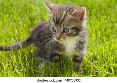 little cat on green grass