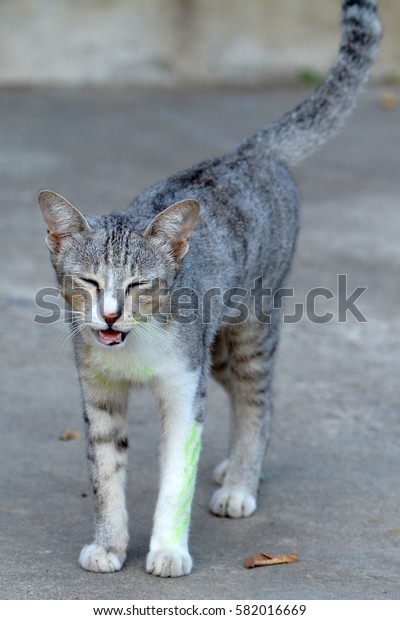 a little cat on the ground, Thailand