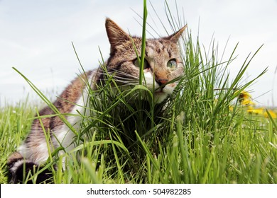 A little cat on the hunt hiding behind grass