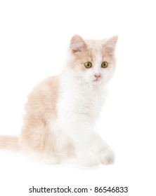 Little cat on a white background