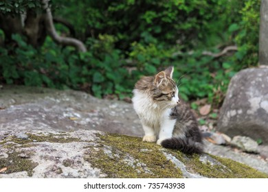 A little cat in outdoor
