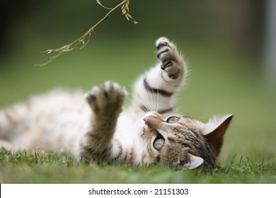 Little cat playing in the grass