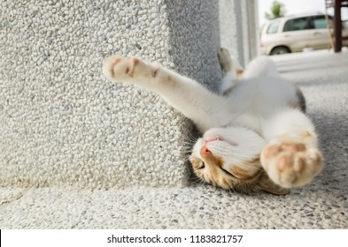 little cat sleep in a funny pose in the outside