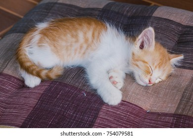 little cat are sleeping.happiness and relax.