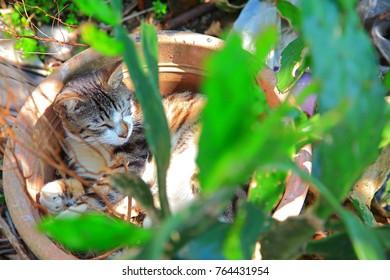 little cat sleeps in a flower pot