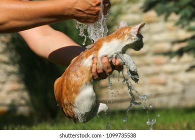 Little cat takes a summer bath