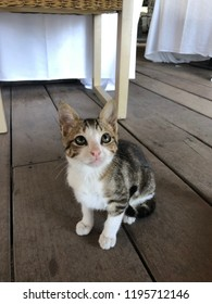 Little cat under the table