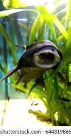 little catfish in aquarium