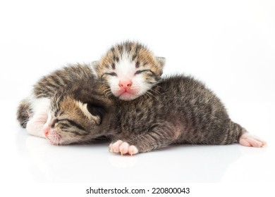 Little cats lying on white background.