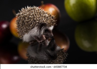 Little charming hedgehog with apples
