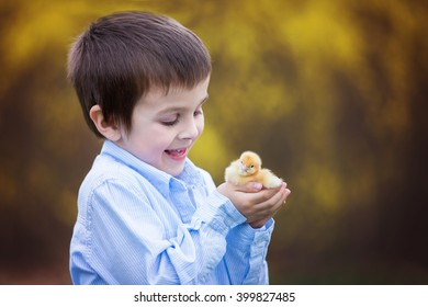 Little chick in child hands, cute little boy, holding cute 3 days old yellow chick