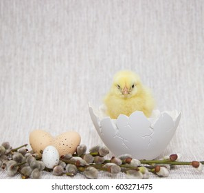 little chick sitting inside shell egg, easter composition
