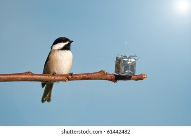 A little Chickadee is surprised to find a shiny present left on a branch for him at Christmas time on a bright sunny day.