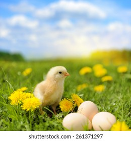 Little chicken and egg on the grass in summer day