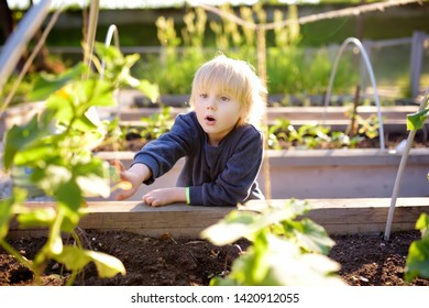 Little child is in community kitchen garden. Raised garden beds with plants in vegetable community garden. Lessons of gardening for kids.